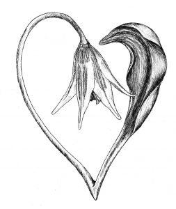 Flower forming a Heart shape