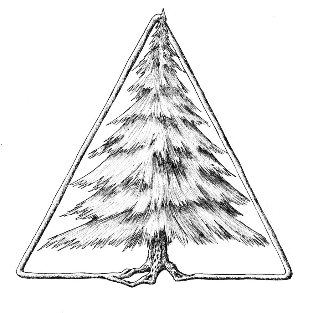 Evergreen Tree in Triangle ink drawing