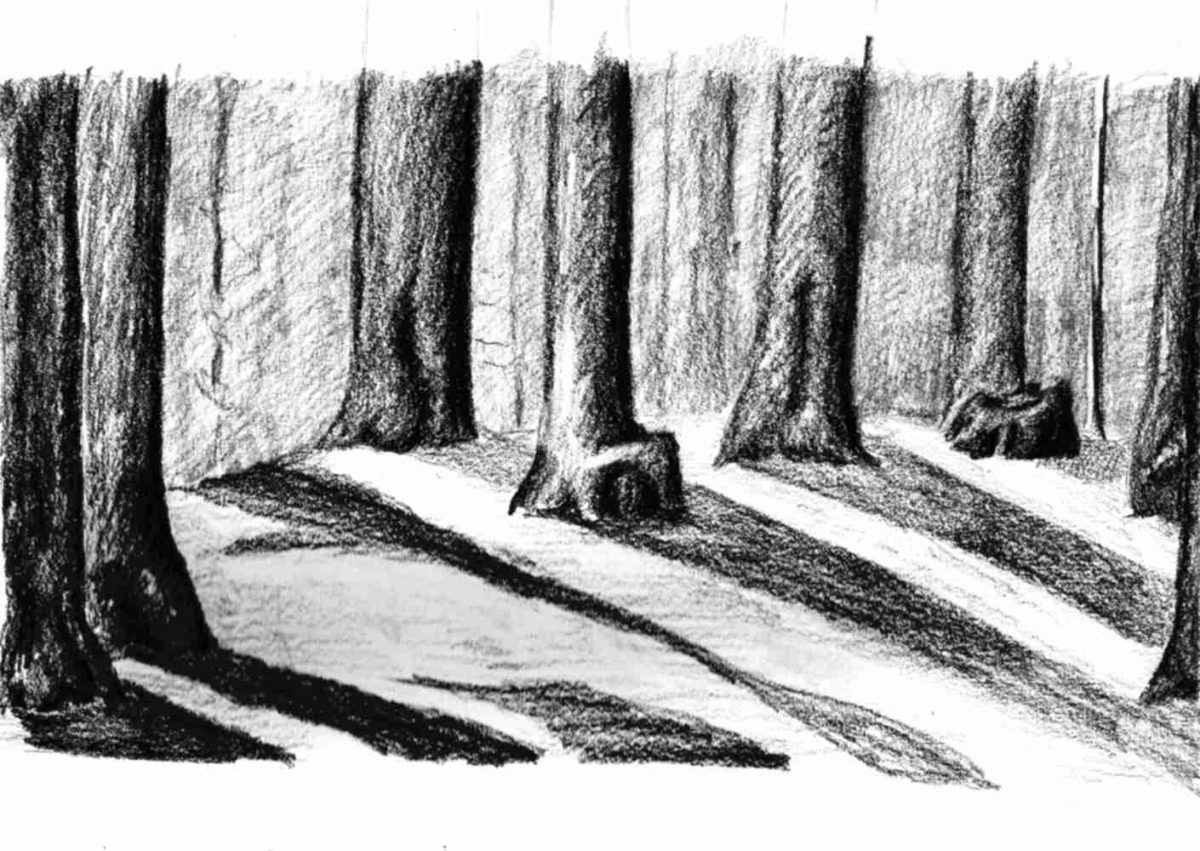 Charcoal drawing of trees casting shadows in the forest