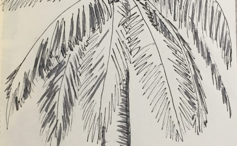 Sketching in Biscayne National Park