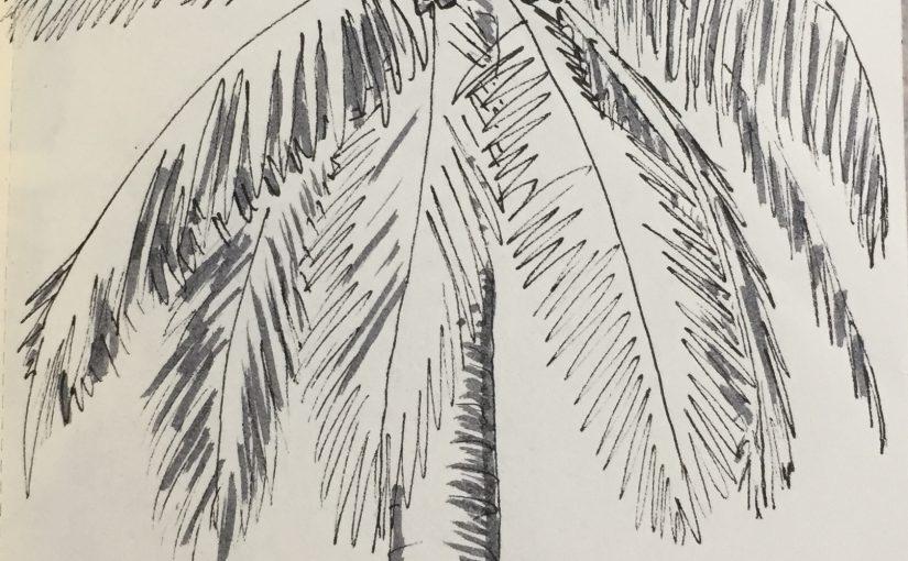 Sketching in Biscayne National Park